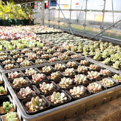 トロピカルガーデンの栽培環境